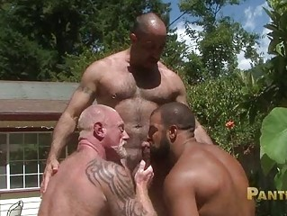 bearded gay bears share lone fucking big meat rod